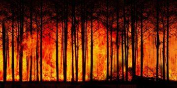 Cambio Climático y Voluntad Política